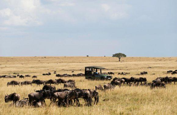 3 Days Masai Mara via Nairobi