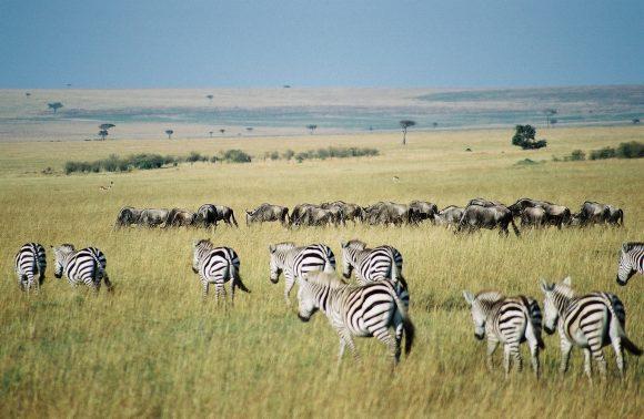 6 Days Classic Safari Kenya