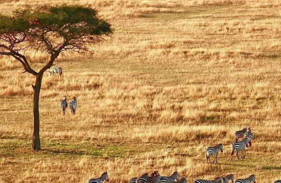 Masai Mara/Lake Nakuru Kenya Safari
