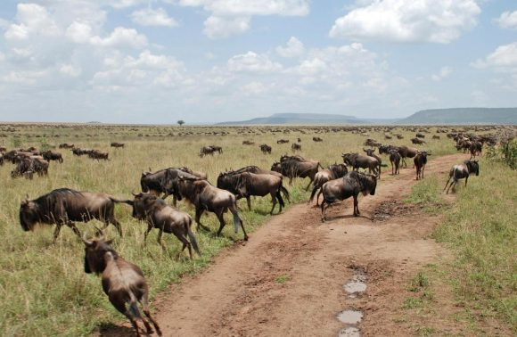 3 Days Samburu National Reserve