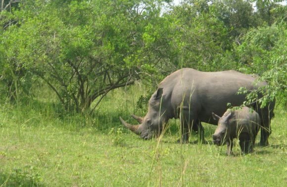 Murchison Falls & Rhino Tracking