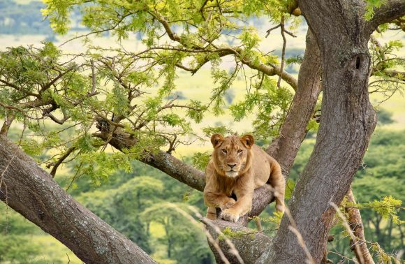 23 Days Uganda and Rwanda Safari
