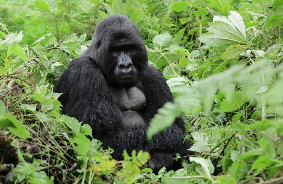 8 Days Wildlife and Gorilla Safari Rwanda