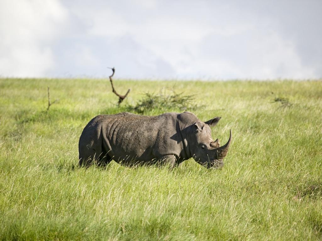 Rwanda is open for tourism | Neza SAFARIS